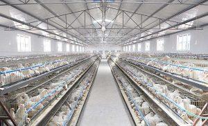 养殖场图片