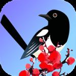 喜鹊快讯app